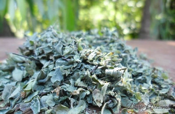 Oregano natural