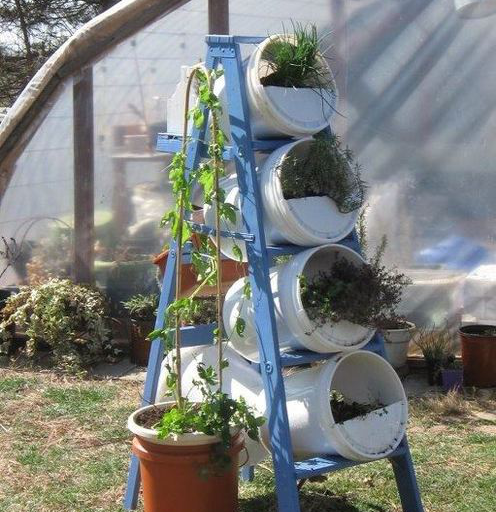 Original idea con tachos de pintura para la huerta en casa