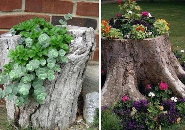 Plantas en troncos caidos en el jardin