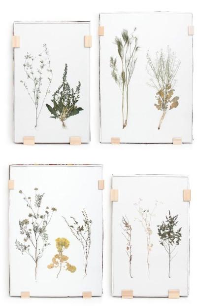 Como hacer un herbario decorativo
