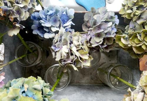 Secar hortensias